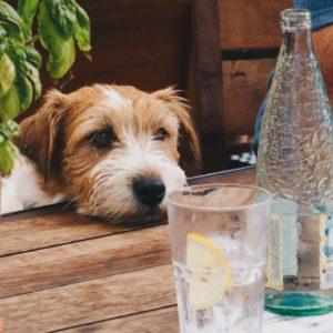 Co pić w upały - 5 propozycji ratujących życie