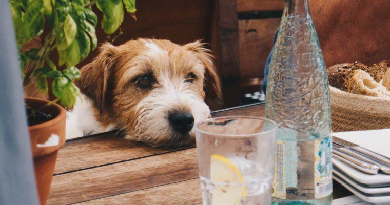 Co pić w upały – 5 propozycji ratujących życie
